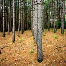 rôle social des arbres