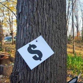 mon arbre vaut cher