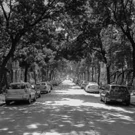 Se mettre au vert grâce à la première puissance du monde urbain, les arbres!