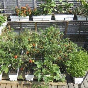 Biotop en réseau sur une terrasse