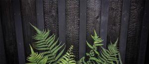 Clôture en bois brûlé Yakisugi, cette technique venue du Japon
