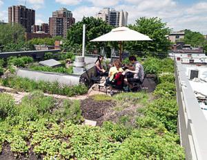 Toiture végétalisée, pour la réduction des îlots de chaleur à Montréal
