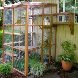 Catio (patio pour votre chat)