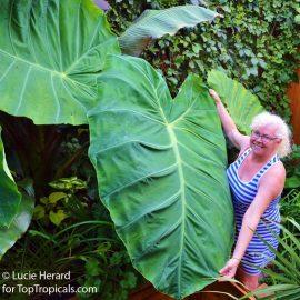 Lucie Herard montreal-garden-21032391_10213135495237904